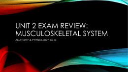 Unit 2 Exam Review: Musculoskeletal SYstem