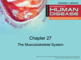 The_Musculoskeletal_System_27