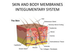 skin and body membranes integumentary system