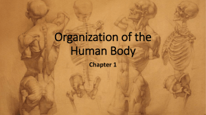 Chapter 1-Organization of the Body