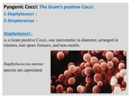 The Gram`s positive Bacilli