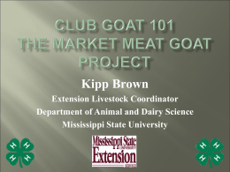 MARKET GOATS 101 The Club Goat Project