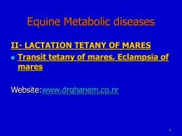 Lactation tetany in mares