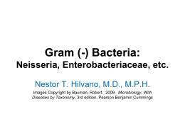 Gram (-) Bacteria: Neisseria, Enterobacteriaceae, etc.