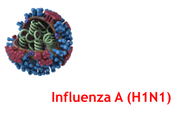 Influenza_AH1N1_Std_PPT