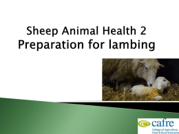 Sheep Animal Health Week 2 6.92MB