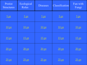 Protist and Fungi Jeopardy
