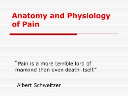 Anatomy and Physiology of Pain