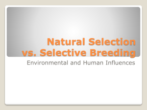 Natural Selection vs. Selective Breeding