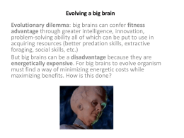 Evolving a big brain