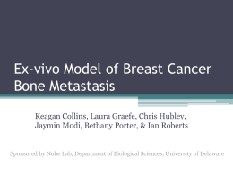 Ex-vivo Model of Breast Cancer Bone Metastasis
