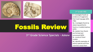 Fossils Review