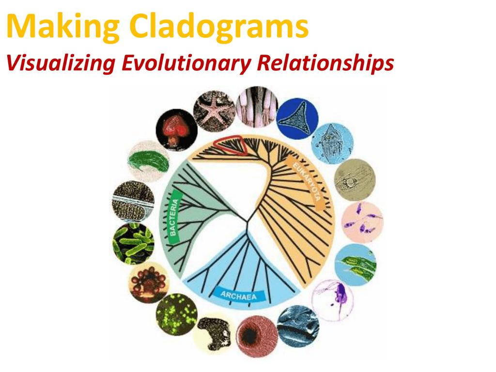 Cladogram worksheet biology corner