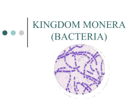 bacteria kingdom monera prokaryotes domain. Black Bedroom Furniture Sets. Home Design Ideas