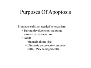 Purposes Of Apoptosis