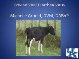 BVD PI: Powerpoint