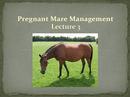Lecture 3 - Pregnant Mare Management