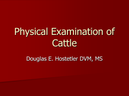 Physical Examination of Cattle Lecture 2