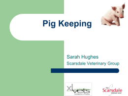 Pig Keeping - Derbyshire Smallholders Association