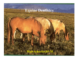 Dental Powerpoint - Dairyland Veterinary Services