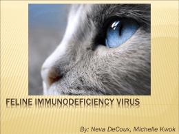 Feline Immunodeficiency Virus - Dr. Brahmbhatt`s Class Handouts