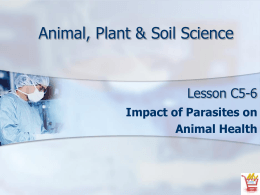 Impact of Parasites on Animal Health