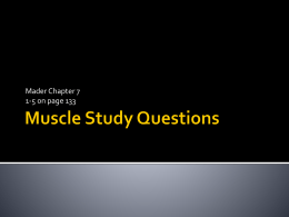 Muscle Study Questions