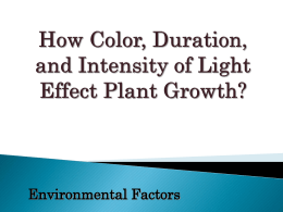 How Light Effects Plant Growth