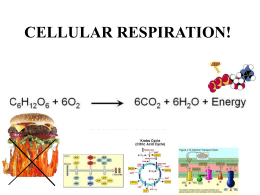 Lecture 22: Cellular Respiration