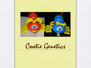 Cootie Power Point Presentation