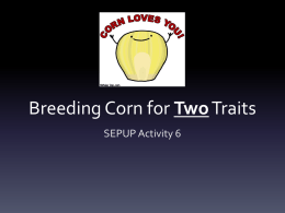 Breeding Corn for Two Traits