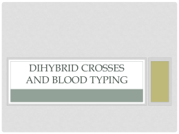 Dihybred and Blood Typing Powerpoint