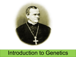 ppt Mendelian Genetics - Fort Thomas Independent Schools