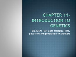 Ch 11- Introduction to Genetics