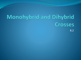 Worksheet: Dihybrid Crosses