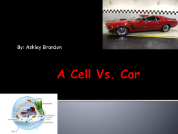 A Cell Vs. Car