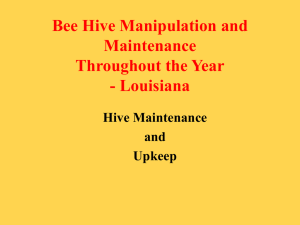 Bee Hive Manipulation Throughout the Year