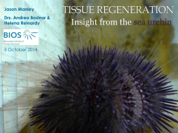 Insight from the Sea Urchin Lytechinus variegatus