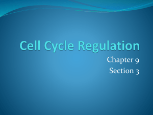 Cell Cycle Regulation 9.3 - Biology-RHS