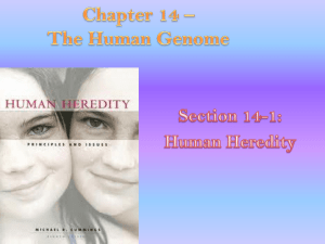 Chapter 14 * The Human Genome