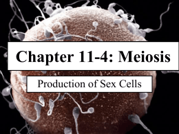 Chapter 11-4 Meiosis ppt Pitt