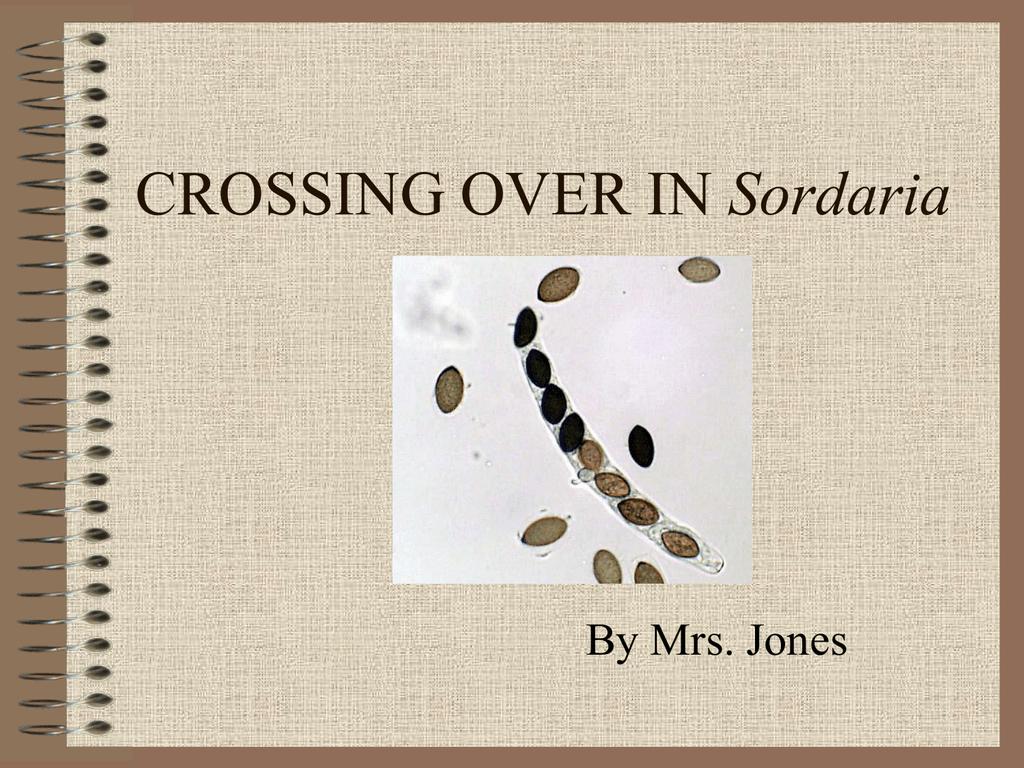 meiosis and crossing over in sordaria