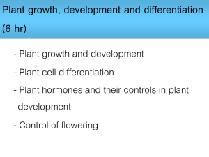 Growth Handout 2