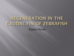Ppt introduction to fin regeneration
