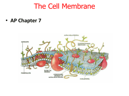 AP Bio Chap 7 The Cell Membrane only