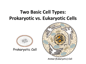 Two Basic Cell Types - Biology with Miss G.