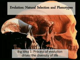 Evolution Nat Selection and Phenotypes