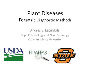 Plant Diseases Diagnostic Methods