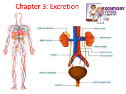 excretion in plants