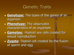 Genetic Traits and Vocab